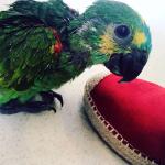 Clínica Veterinária BirdCare